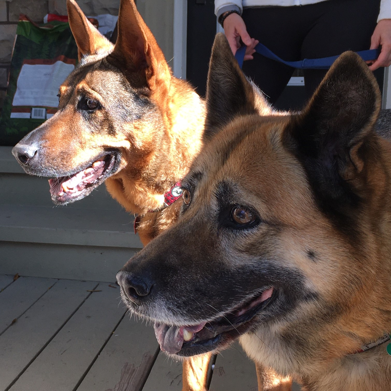 Picture of Hope & Bella (BONDED PAIR)