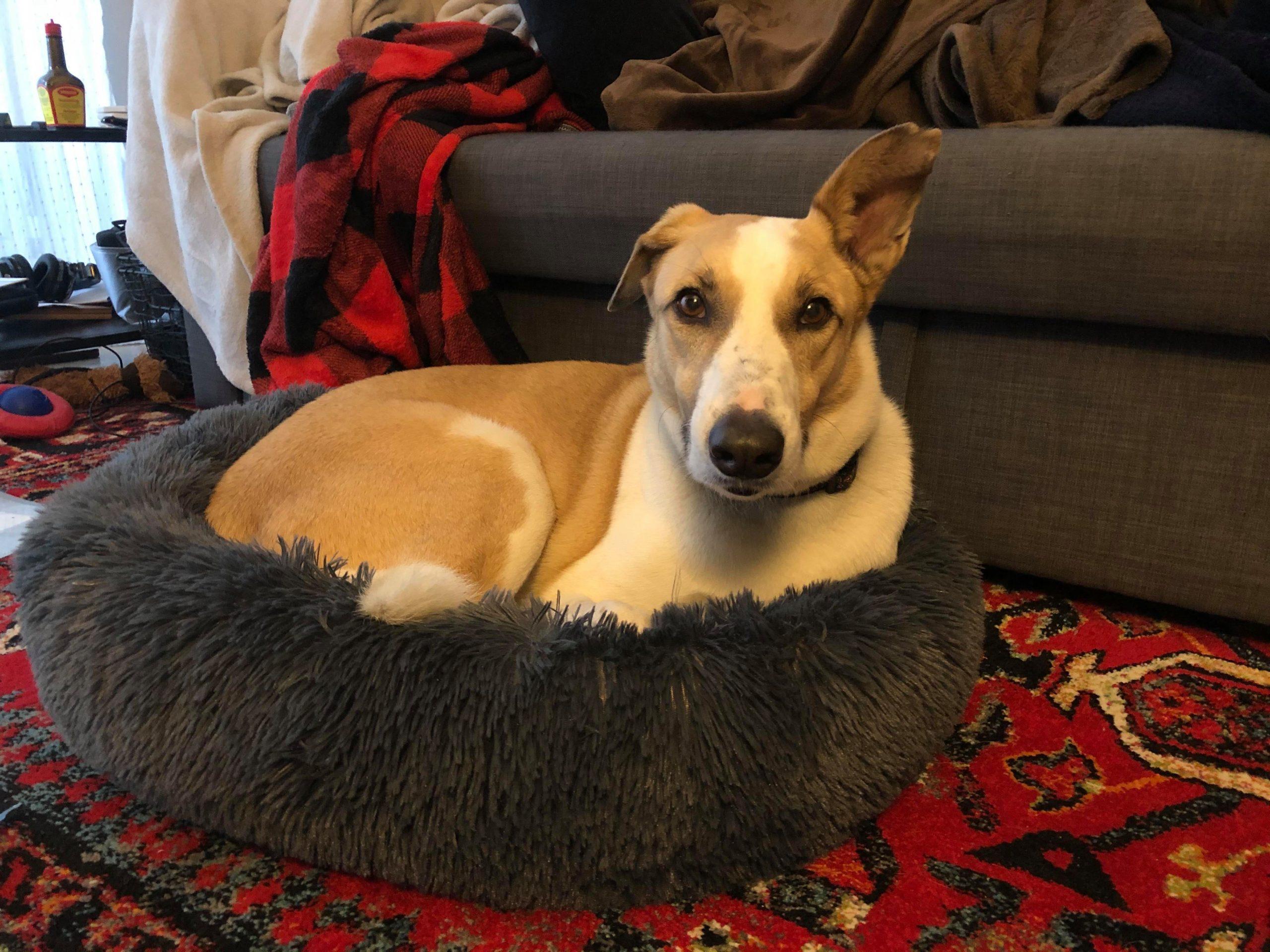 Picture of Jasper