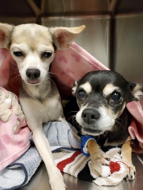 Picture of Minnie and Dexter