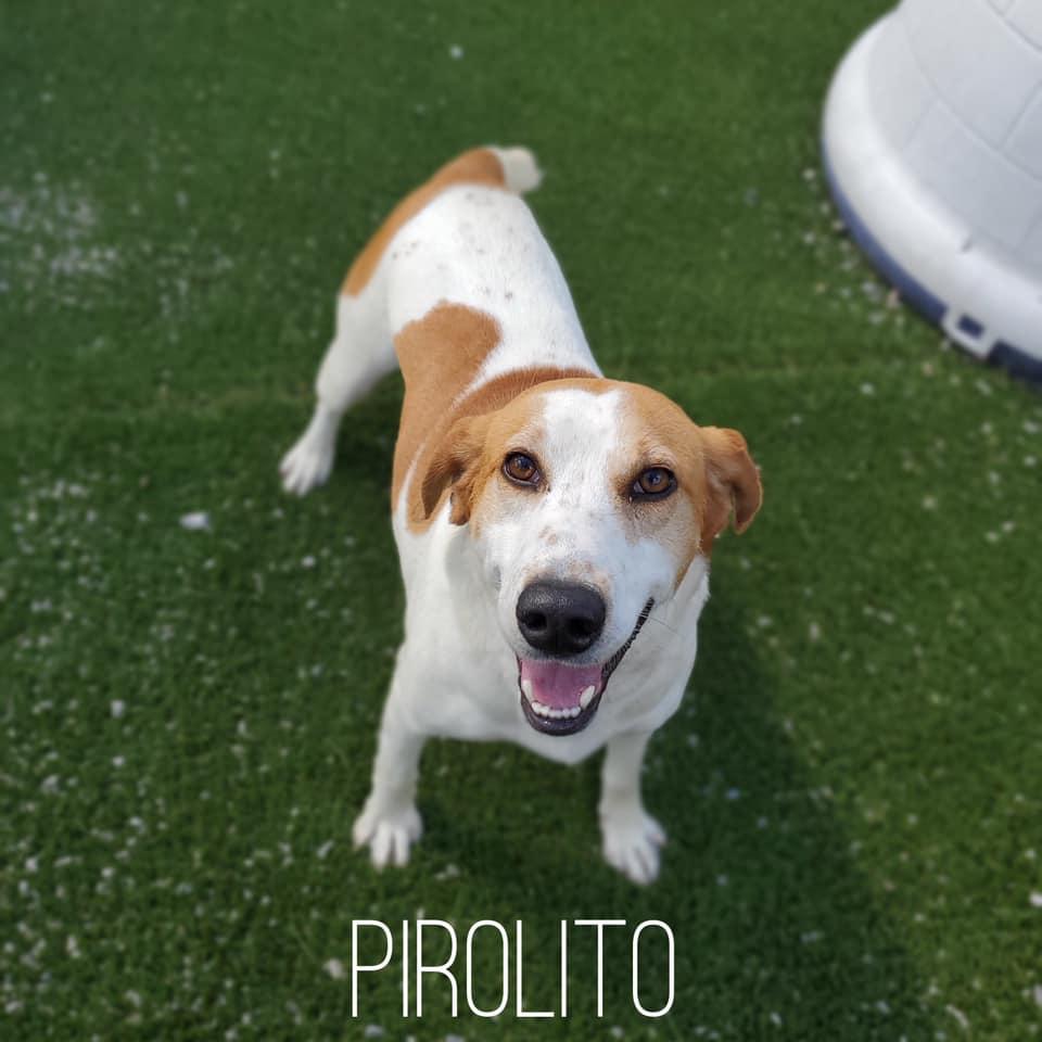 Picture of Pirolito